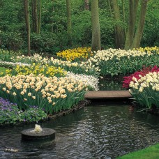 LANDSCAPE COLLECTION - 600 BULBS